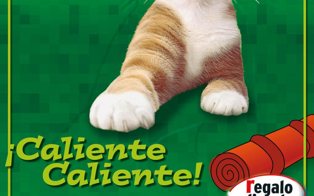 Cartel   Kitecat